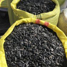 فروش تخمه قلمی خوی Sale of temperament seeds
